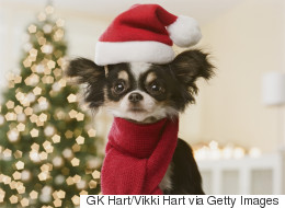 Christmas Gifts For Pets: Tasty Treats And Purrfect Presents For Cats And Dogs