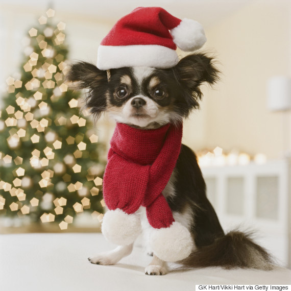 Christmas Gifts For Pets: Tasty Treats And Purrfect Presents For ...