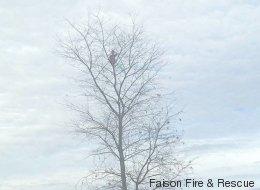 Niño de 6 años se queda atrapado en un árbol de 50 pies de altura