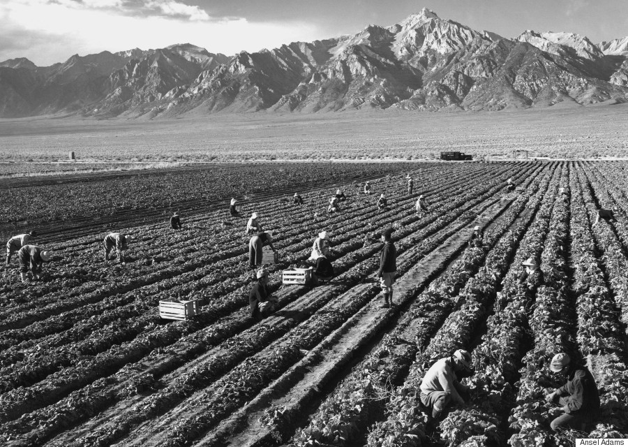 these photos capture struggle and resilience in a ese  ansel adams