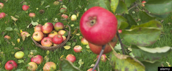 Apple Picking New York Upstate