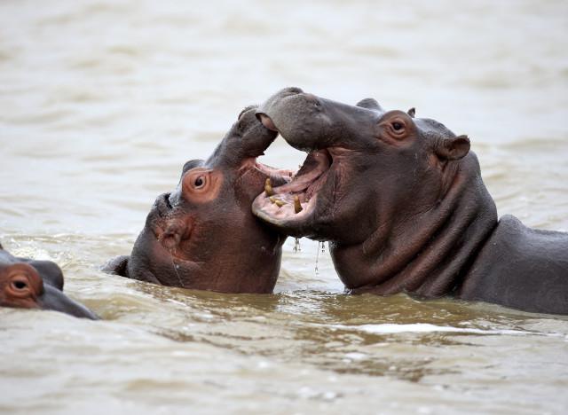 5 animaux qui ont une vie sexuelle beaucoup plus misérable que la vôtre... dans Actualités a-VIE-SEXUELLE-ANIMAUX-640x468