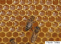 Beesness Better: Μια startup για τη βελτιστοποίηση της μελισσοκομικής παραγωγής