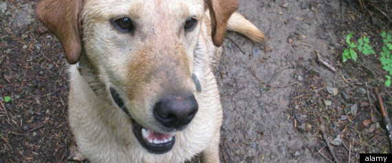 PREVENTING ANIMAL DENTAL DISEASE