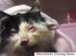 Petrified Kitten Had Eyes Glued Shut By Manchester 'Sickos'