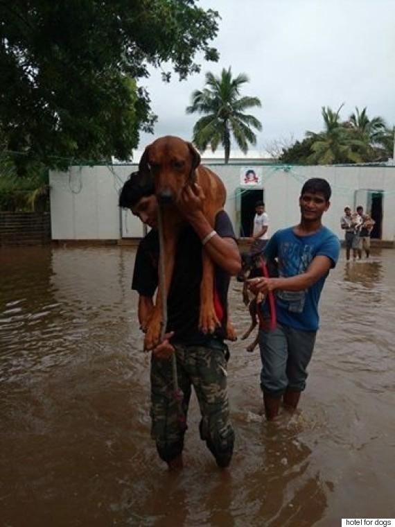 dogs rescue