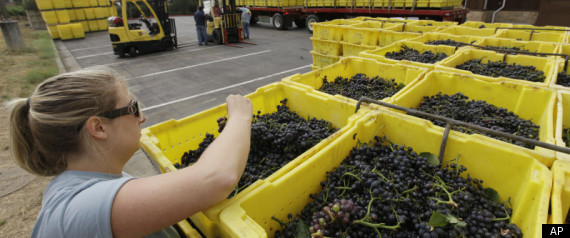 CA WINE GRAPE SHORTAGE