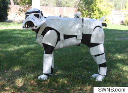 Doberman Pincher Makes A Star Turn As A Stormtrooper