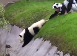 Tenemos que hablar acerca de este raro video de un panda