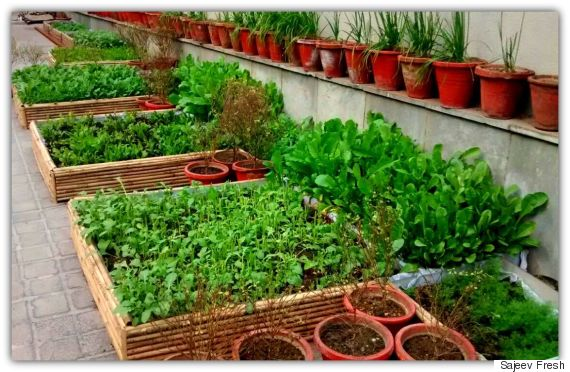 This Organic Producer Is Sowing Seeds Of Hope In Delhi By