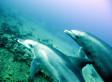Tragedia ambiental: Mueren 16 delfines en playas de Baja California