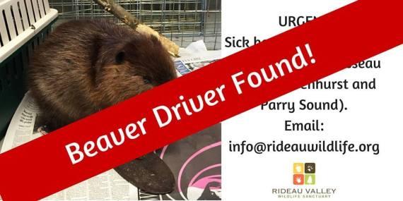 beaver driver found