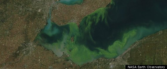 Lake Eerie Toxic Algae