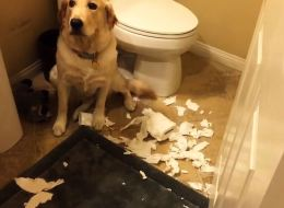 Guilty Dogs Getting Caught Will Make You Cry Laughing