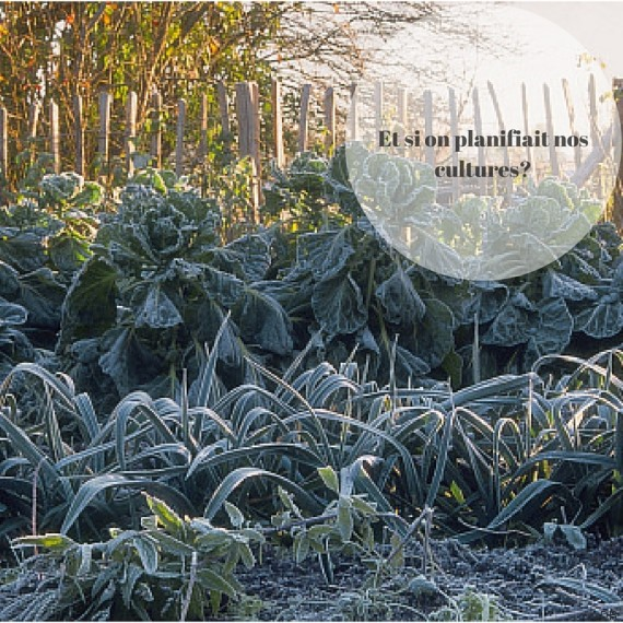potager hiver
