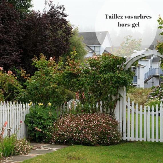 en janvier c 39 est le moment de se soigner avec son jardin. Black Bedroom Furniture Sets. Home Design Ideas