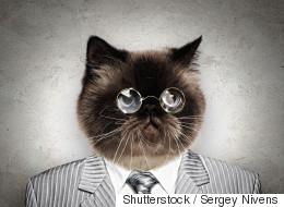 Municipales en Sibérie: un chat en tête des sondages