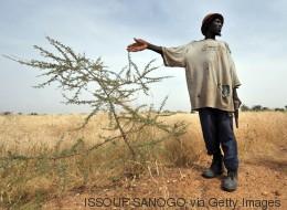 Was der Klimawandel für Afrika bedeutet