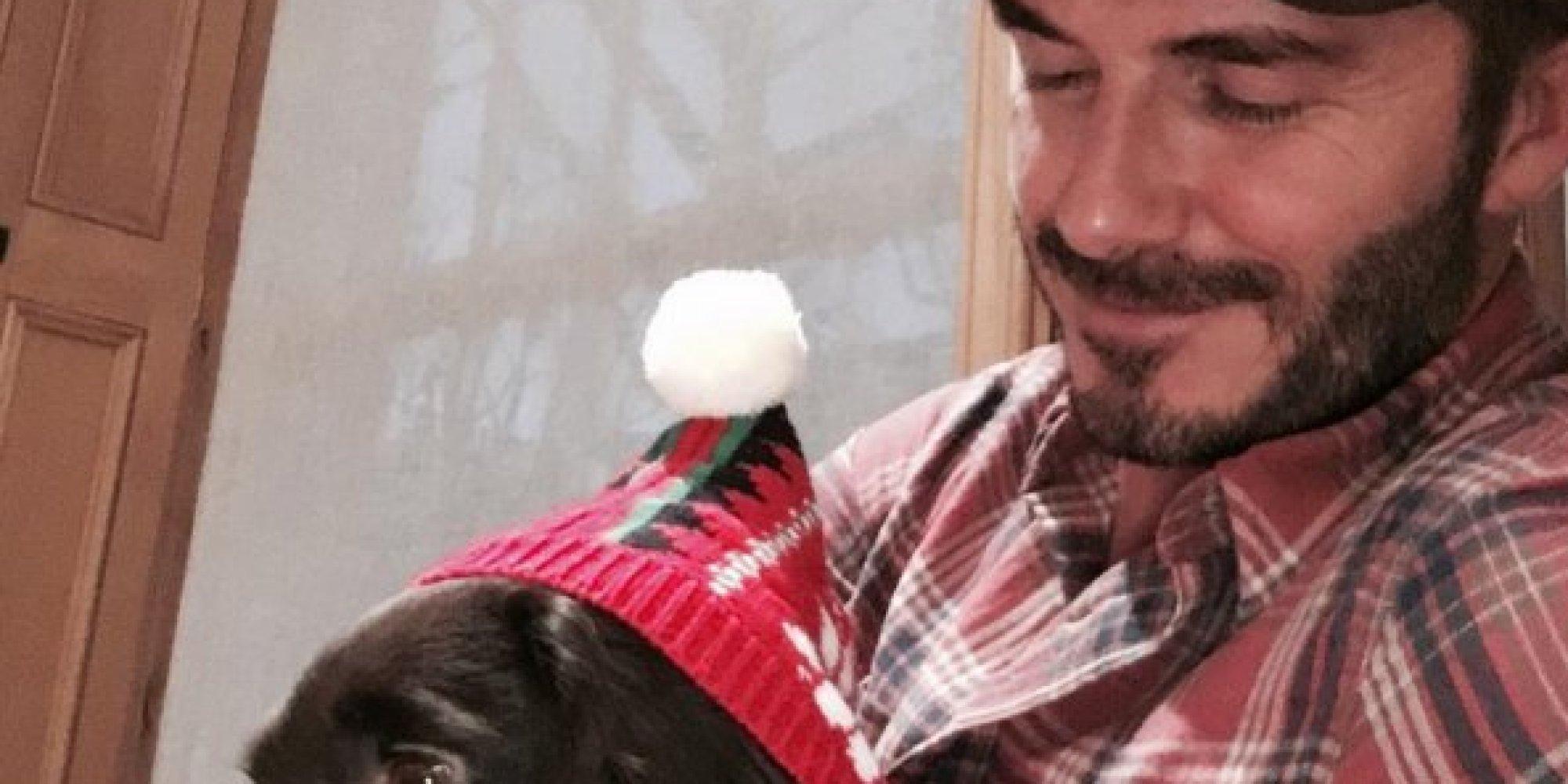 David Beckham's Not The Only Person Sharing Puppy Love ... David Beckham Facebook