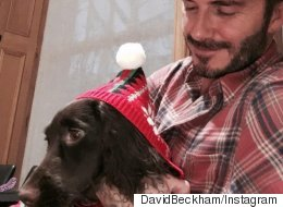 Becks Has Puppy Love, But What Are The Rest Of Us Sharing This Christmas?