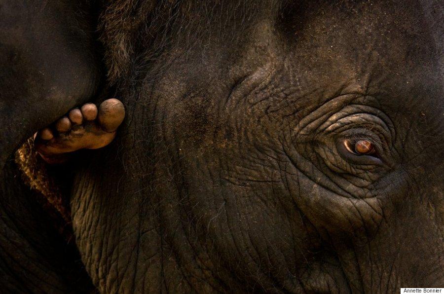 El Baño Lleva Zocalo:Indian Spiritual Elephant