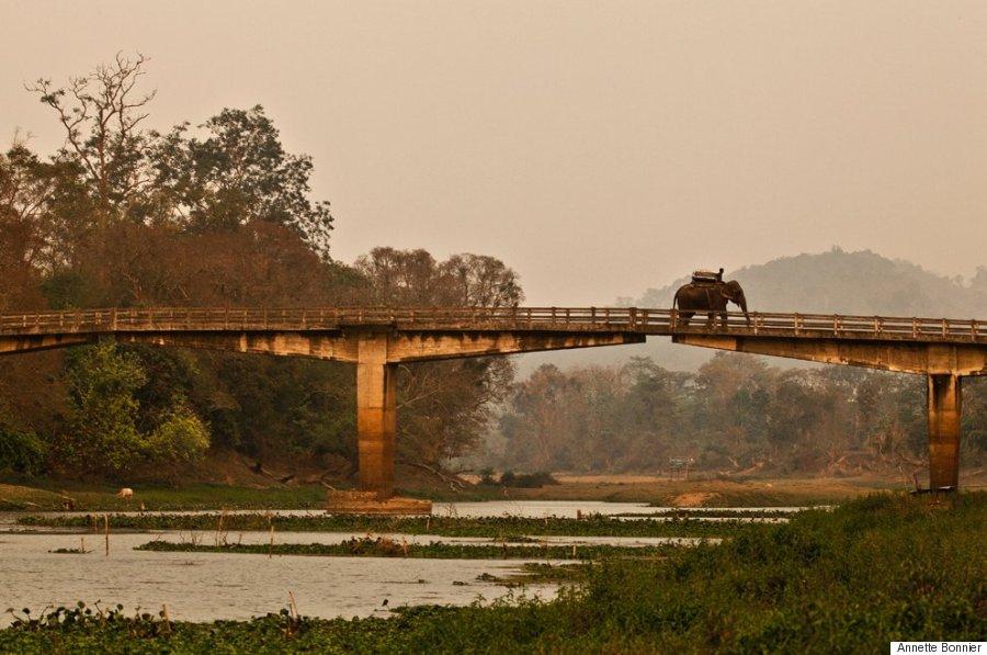 El Baño Lleva Zocalo:Elefantes en la India: criaturas espirituales y esclavizadas
