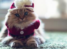 25 gatos guapos que están más que listos para recibir a Santa