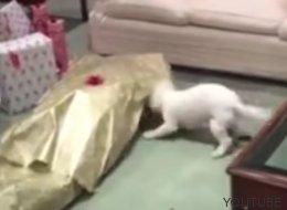 Ces chiens sont vraiment trop excités d'avoir reçu un cadeau à Noël (VIDÉOS)