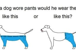 How A Dog Should Wear Pants Becomes Latest Unlikely Viral Debate