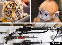 Ohio Man Reportedly Traded Guns For Exotic Animals