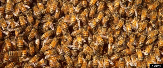 UTAH BEE SPILL