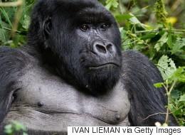 8 animaux qui ne survivront peut-être pas à 2016 (VIDÉO)