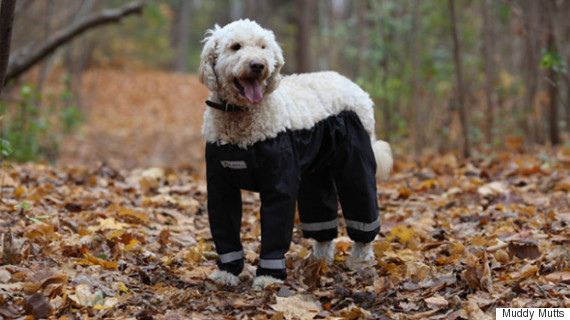 muddy mutts dog wearing trousers pants