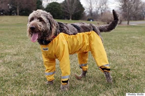 muddy mutts dog wearing pants trousers