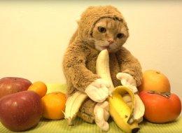 Ce chat déguisé en singe est irrésistible (VIDÉO)