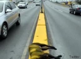 Trabajadores pintan banqueta con todo y perro muerto