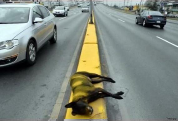 perro muerto