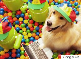 A Dog Taking Over Google Is Everything You Need On Hump Day