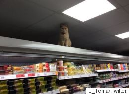 Cat Walks Into Sainsbury's, Refuses To Give Up Shelf Again