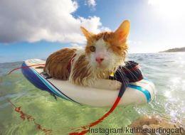 Ce chat borgne surfe et se la coule douce à Hawaï (VIDÉO)