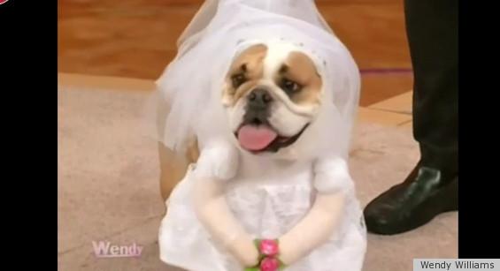 Kate Middleton Wedding Dress Now A Dog Halloween Costume (PHOTOS ...
