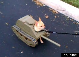 Top 10 Viral Videos: Ninjas, Human Slingshots And Tank Dog