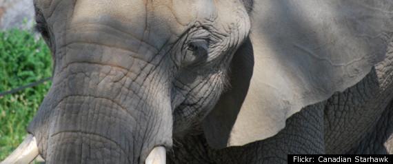 TORONTO ZOO ELEPHANT BOB BARKER