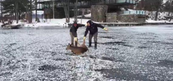 ontario deer rescue