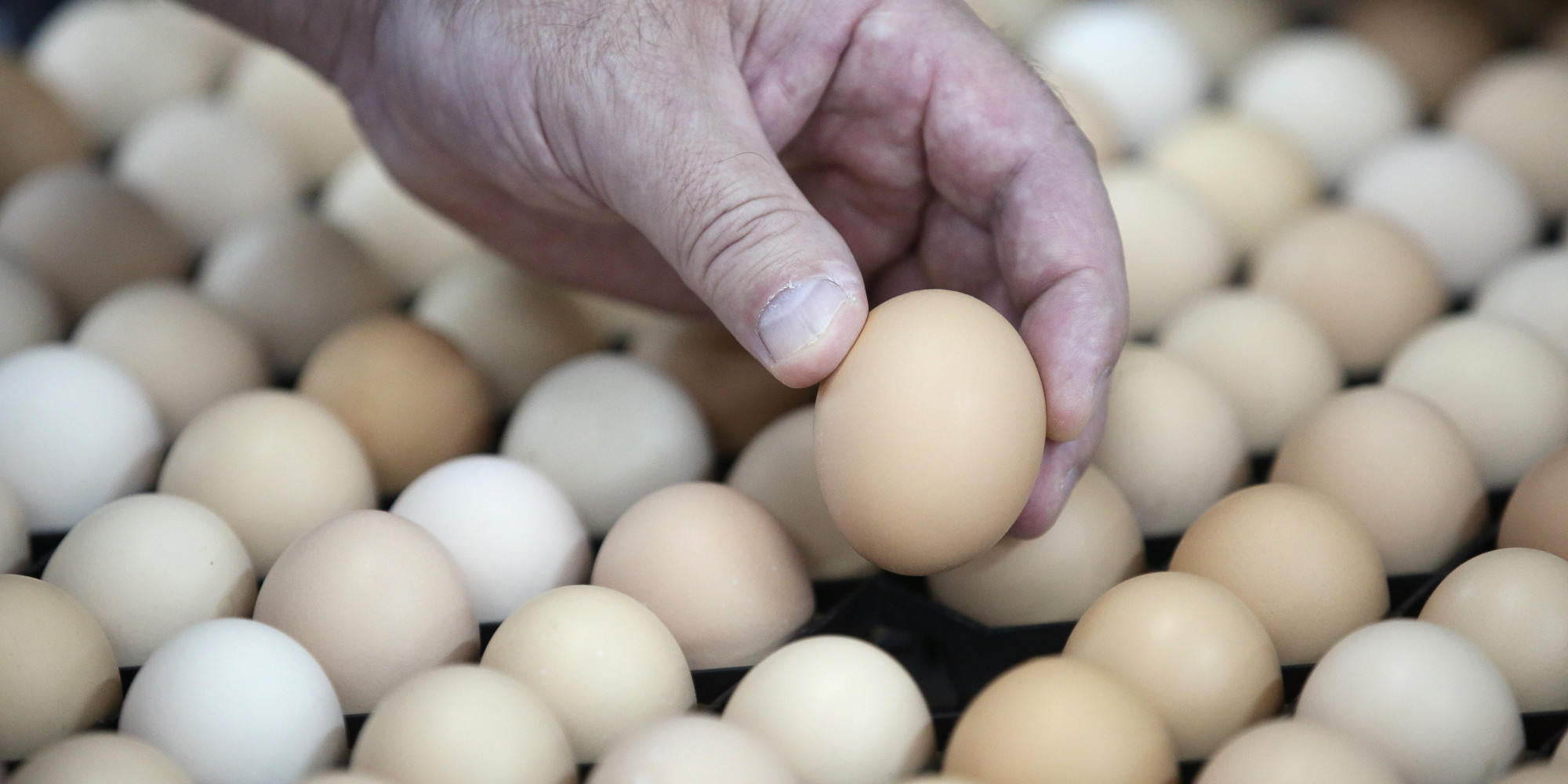 how to find out if eggs are fresh