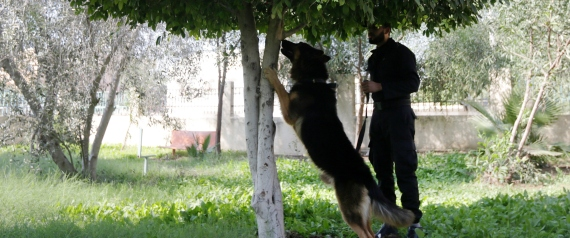 EGYPT POLICE DOGS