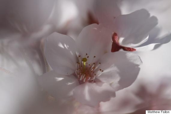 canberra arboretum national japanese crepe myrtle