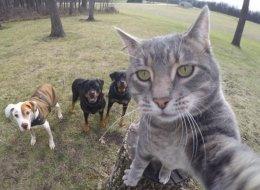 Ce chat devient une star d'Instagram avec ses selfies (PHOTOS)