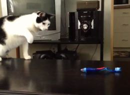 Cats Really Don't Like Toothbrushes, Apparently