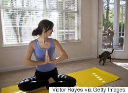 Cat Yoga Lets You Flex While Making Feline Friends